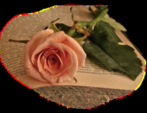 25. rocznica święceń kapłańskich Ks. Tomasza (10.06.2020)